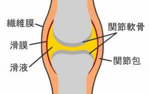 膝関節の仕組み